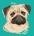 pug painting poster vector image