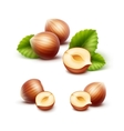 Set of Peeled Unpeeled Hazelnuts with Leaves vector image vector image