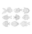 tropical fish set adult entangle coloring book vector image