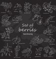 Collection of garden and wild berries in sketch vector image