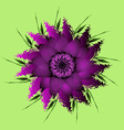 Lilac purple peony flower vector image vector image
