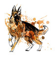 Colored hand drawing of a German Shepherd vector image vector image