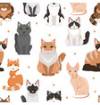 seamless pattern cute cats colored vector image