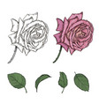 sketch rose set vector image vector image