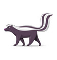 skunk animal standing on a white background vector image