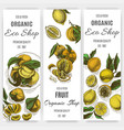 banner for eco store colorful citrus card vector image vector image