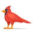 cardinal bird on a white background vector image vector image