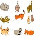 a set with the image colored cats vector image vector image