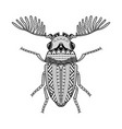 bug hand drawn vector image vector image