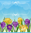 floral background with lilac and yellow crocus vector image