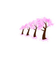 group of japanese cherry blossom trees vector image