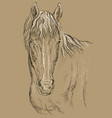 horse portrait-14 on brown background vector image
