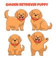 set golden retriever puppy dog vector image