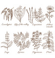 set of medicinal plants in hand drawn style vector image vector image