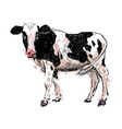 Colored hand drawing cow vector image
