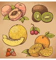 engraving fruits color vector image vector image