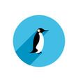 flat penguin vector image vector image