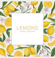 packaging or cover template with fresh citrus vector image