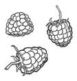 set sketch raspberry vector image vector image