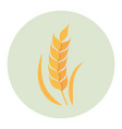 wheat flat icon vector image vector image