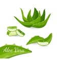 Aloe vera plant and its parts vector image