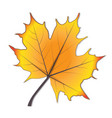 autumn season stylized leaf icon design vector image