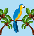macaw bird icon vector image