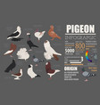 poultry farming infographic template pigeon vector image vector image