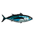 albacore fish on white background vector image