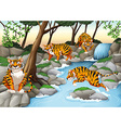 Four tigers living by the river vector image vector image