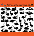 silhouettes of swans vector image vector image