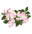 flowers of apple tree vector image