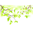 green leaves with copy space vector image vector image