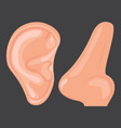 human ear nose vector image