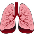bronchial system human lungs vector image vector image