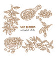 set goji berries on a branch hand drawn medical vector image vector image