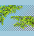 set tree branches with green leaves vector image vector image