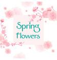 spring flowers sakura pink background image vector image vector image