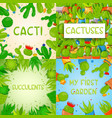 set 4 square banner templates with cactuses and vector image vector image