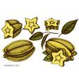 set hand drawn colored starfruit vector image