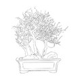 sketch of bonsai vector image vector image
