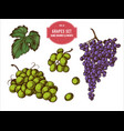 collection hand drawn colored grapes vector image