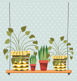 houseplants in macrame hangers and swing vector image vector image