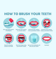 how to brush teeth oral hygiene correct tooth vector image vector image