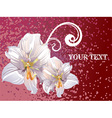 Lily Design with Text Space vector image vector image