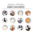 rabbit lapin breed icon set flat design vector image