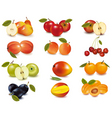 big group of apples vector image vector image