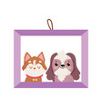 frame picture dogs pet isolated icon white vector image