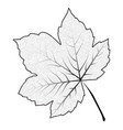image of outline maple leaf isolated on white vector image vector image