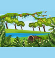 natural outdoor park scene vector image